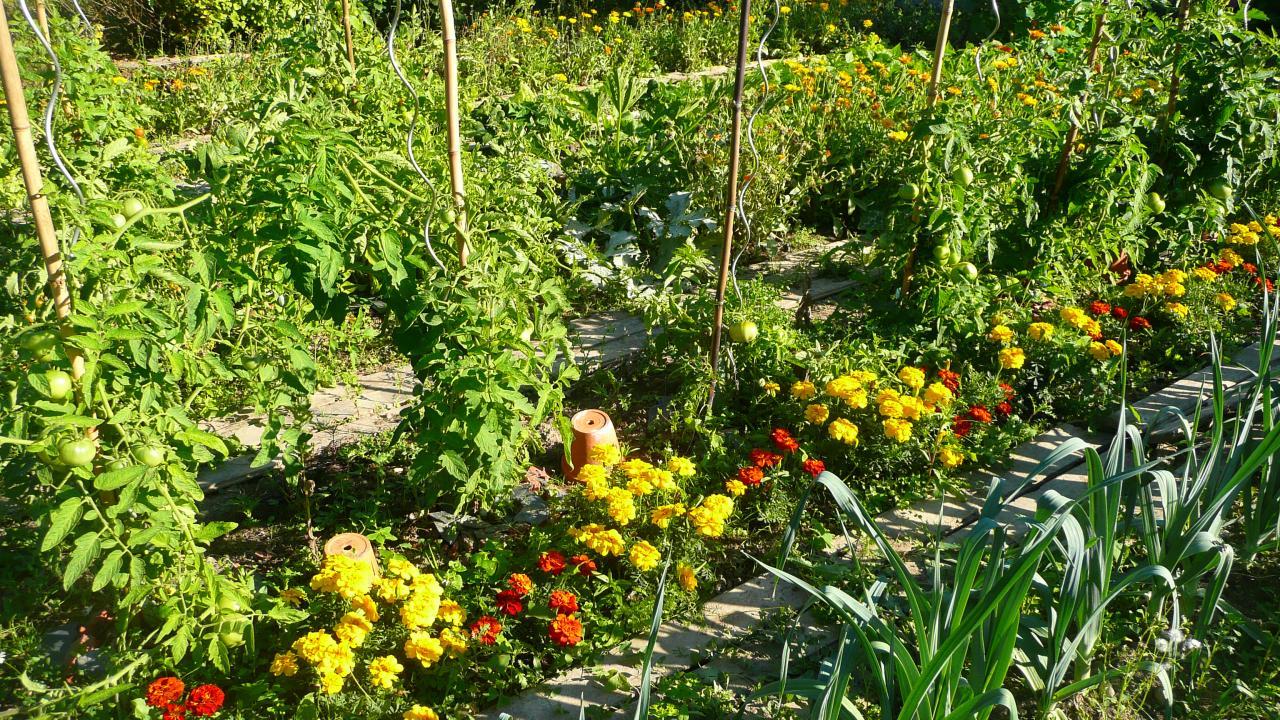Le potager où légumes et fleurs sont en bonne compagnie