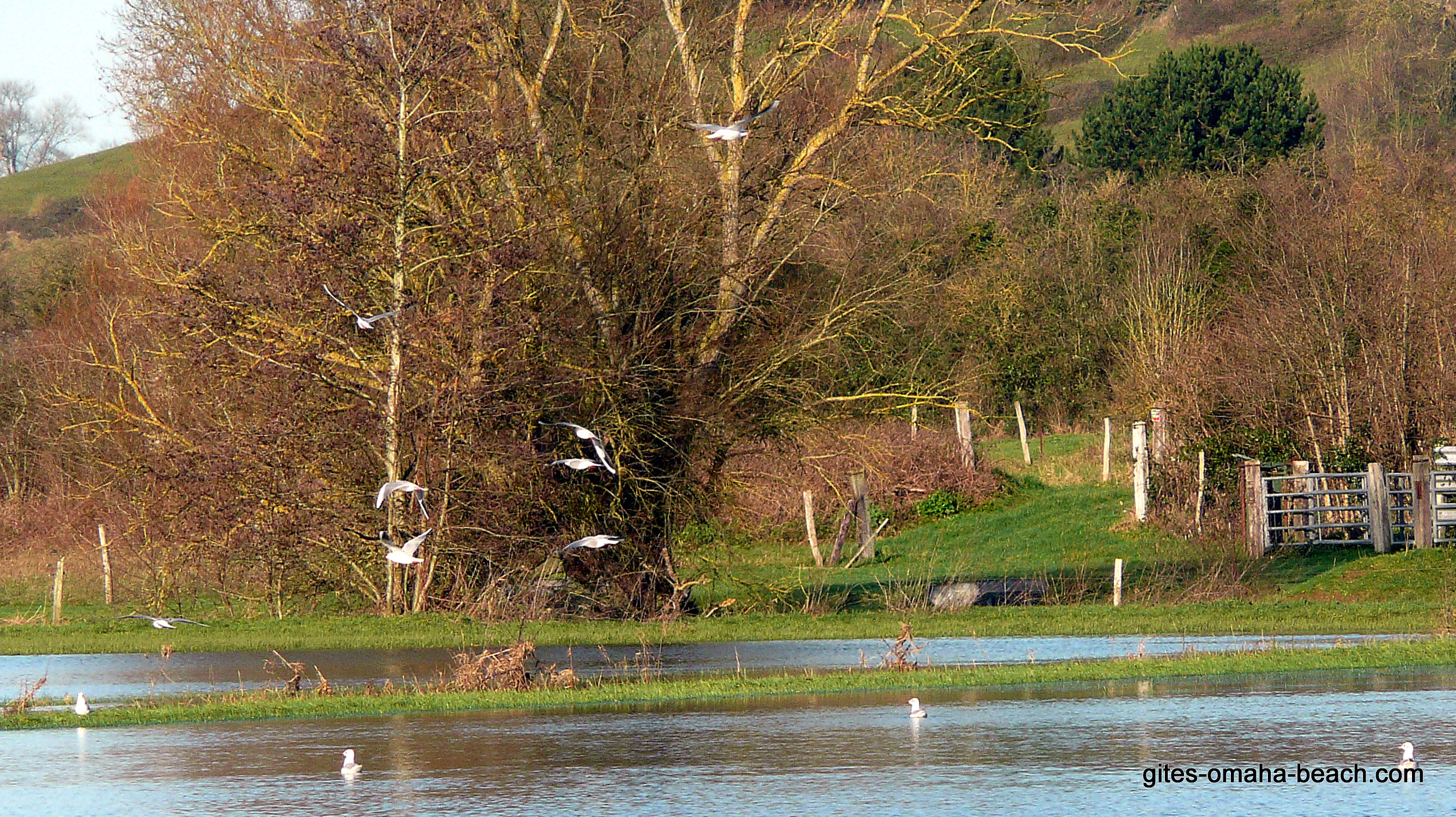 Oiseaux de mer dans le marais à Mandeville-en-Bessin
